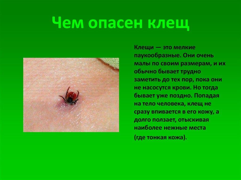 Фото: как выглядят укусы клещей у человека на теле