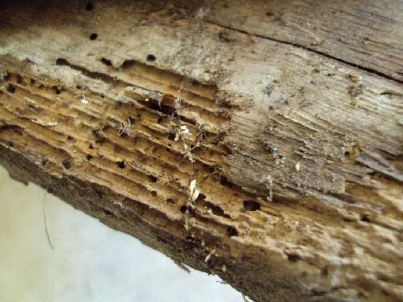 DezMission | ДезМишн - жуки в доме?